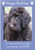 "Labradoodle-Happy Birthday - ""From The Dog"" Theme"